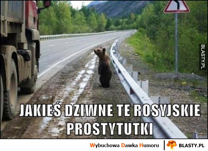 Jakieś dziwne te rosyjskie prostytutki niedźwiedź na poboczu drogi