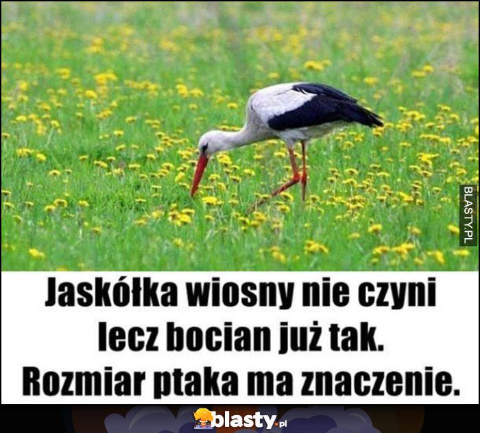 Jaskółka wiosny nie czyni, lecz bocian już tak - rozmiar ptaka ma znaczenie