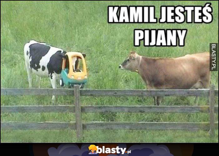 Kamil jestes pijany krowa z wózkiem samochodzikiem na głowie