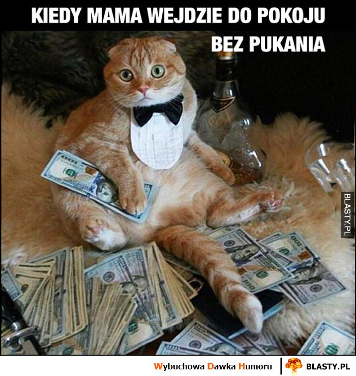 Kiedy mama wejdzie do pokoju bez pukania bogaty dziany kot z hajsem pieniędzmi