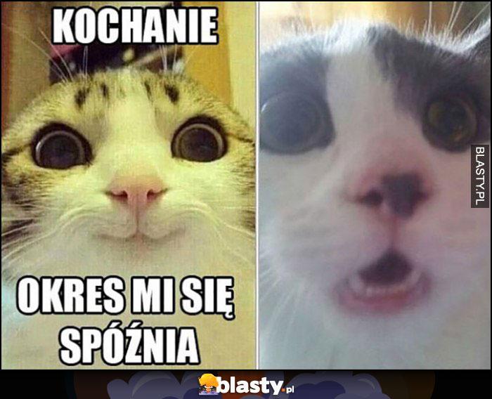 Kochanie okres mi się spóźnia kot zdziwiony koty