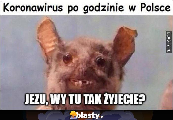 Koronawirus: nietoperz po godzinie w Polsce. Jezu wy tu tak żyjecie?