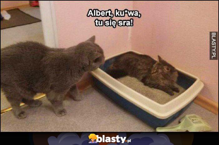 Kot leży w kuwecie, albert kurna tu się sra