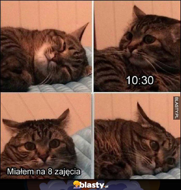 Kot śpi, godzina 10:30 budzi się, miałem na 8 zajęcia
