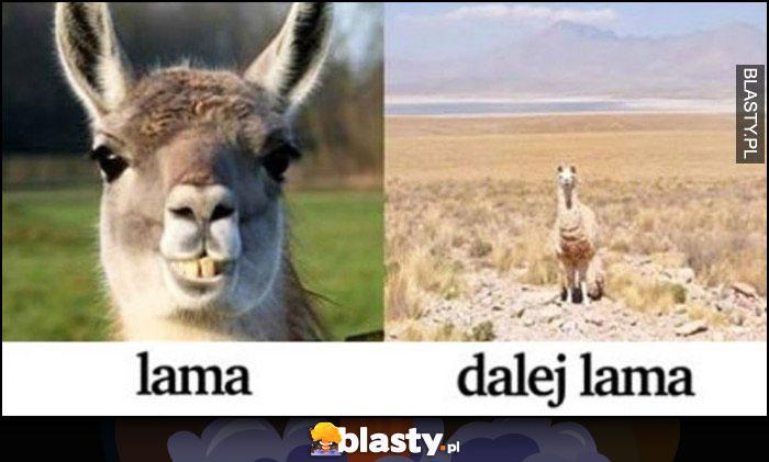 Lama, dalej lama - lama w oddali