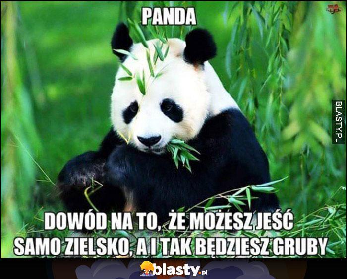 Panda - dowód na to, że możesz jeść samo zielsko, a i tak będziesz gruby