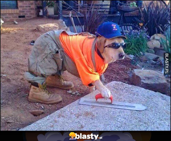 Pies budowlaniec ubrany jak na budowie