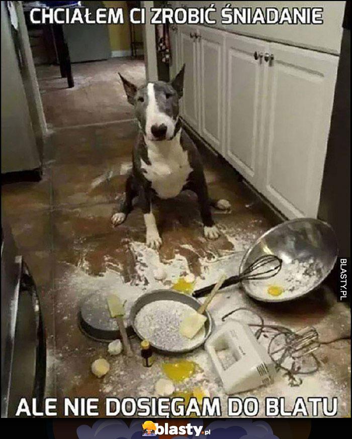 Pies chciałem Ci zrobić śniadanie ale nie dosięgam do blatu. Bałagan w kuchni