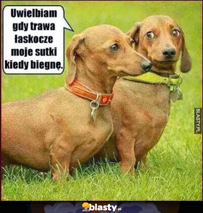 Pies jamnik uwielbiam gdy trawa łaskocze moje sutki kiedy biegnę