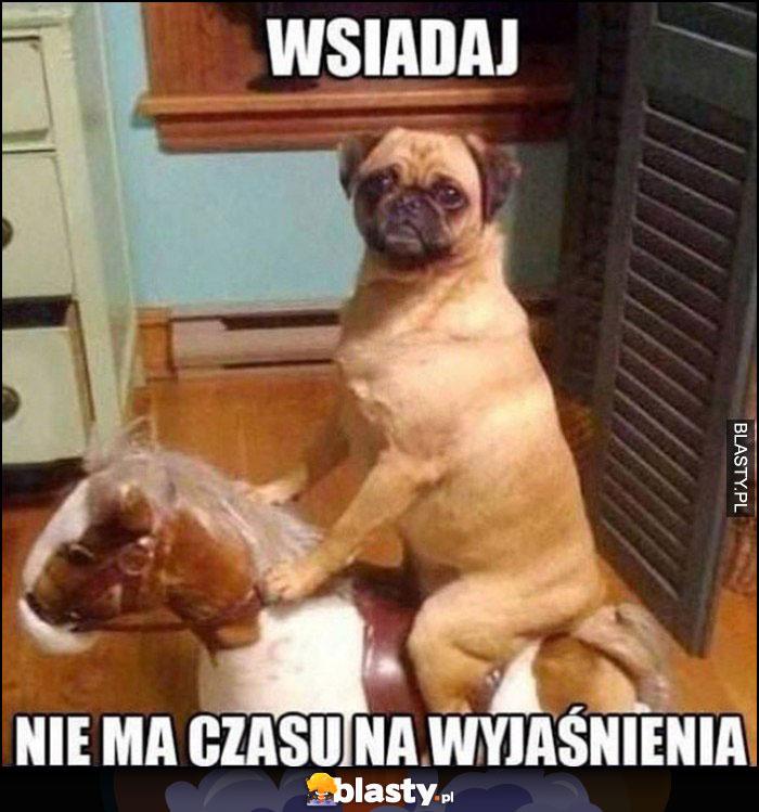 Pies na kucyku, wsiadaj nie ma czasu na wyjaśnienia