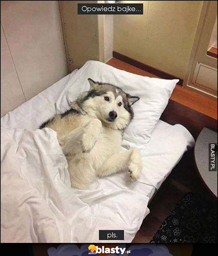 Pies w łóżku opowiedz bajkę plis