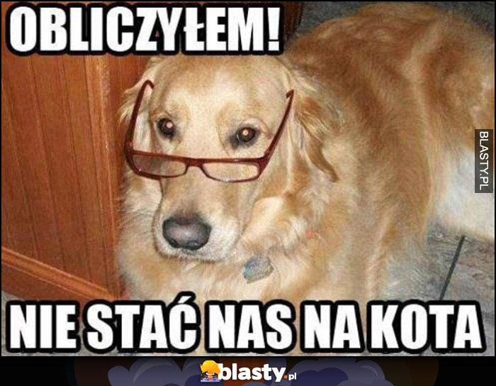 Pies w okularach: obliczyłem, nie stać nas na kota