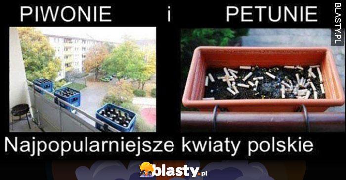 Piwonie i petunie - najpopularniejsze kwiaty polskie, pety i butelki po piwie browarach