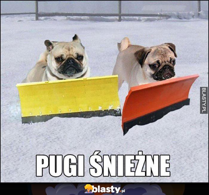 Pugi śnieżne psy mopsy
