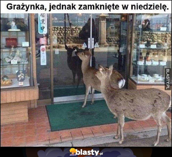 Sarny jelenie przed sklepem: Grażynka, jednak zamknięte w niedzielę