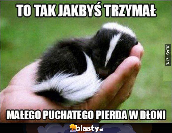 Skunks to tak jakbyś trzymał małego puchatego pierda w dłoni