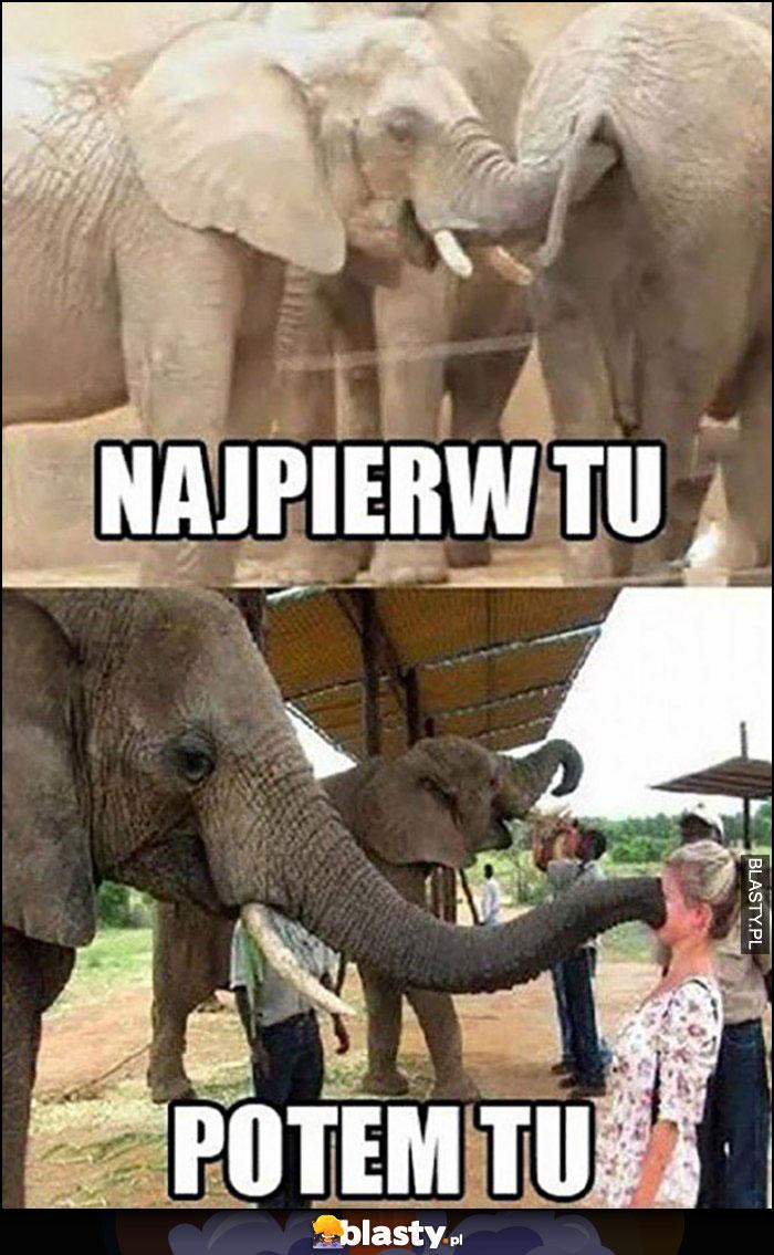 Słoń trąba: najpierw w tyłku, potem tu na twarzy jakiejś laski