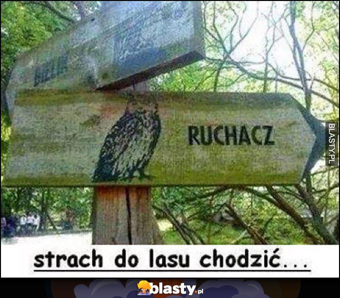 Sowa tabliczka kierunkowskaz puchacz zmienione na ruchacz, aż strach do lasu chodzić