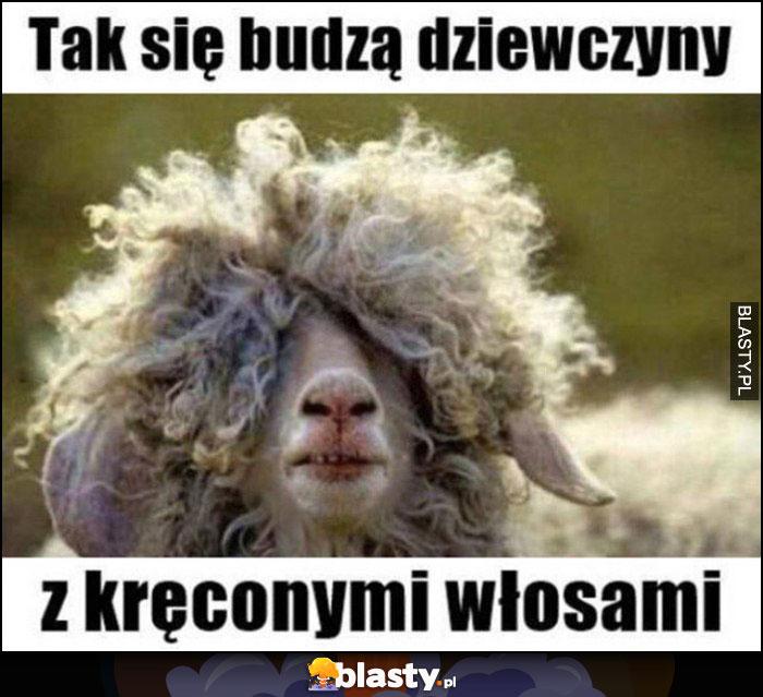 Tak się budzą dziewczyny z kręconymi włosami owca nic nie widzi