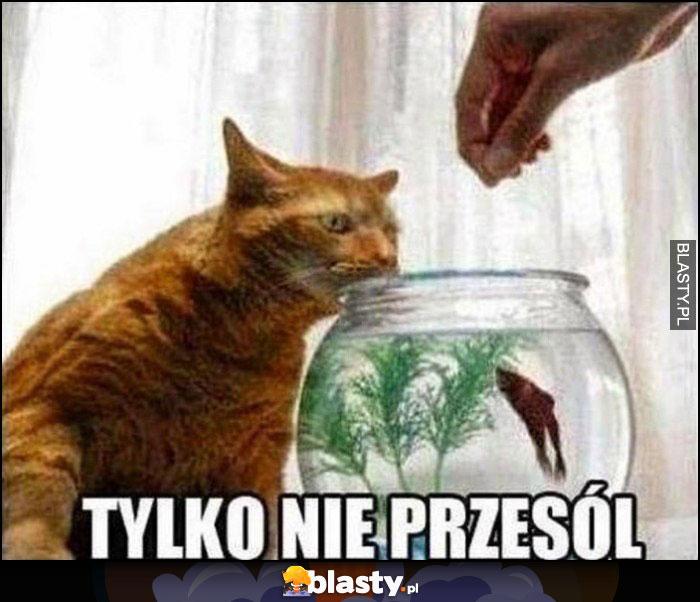 Tylko nie przesól kot patrzy na karmienie rybki w akwarium