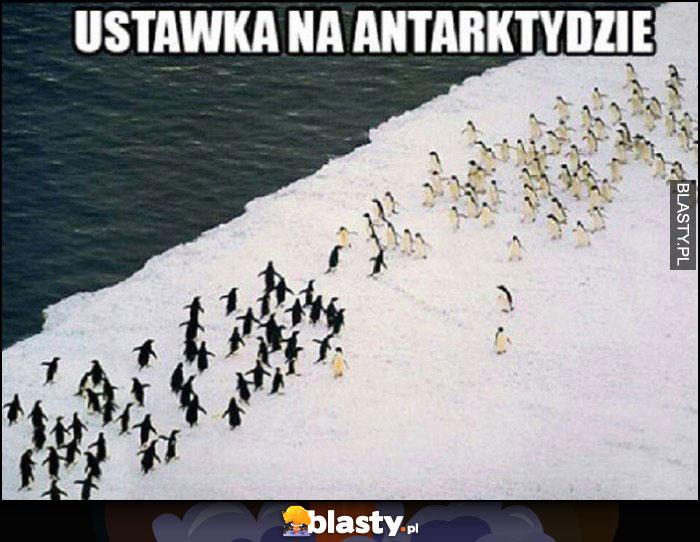 Ustawka na antarktydzie 2 bandy pingwinów walczą ze sobą