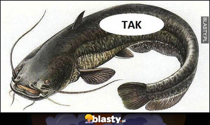 W sumie tak dosłownie słowo tak wewnątrz ryby sum