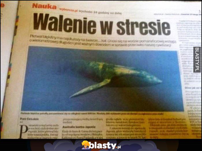 Walenie w stresie tytuł nagłówek w gazecie