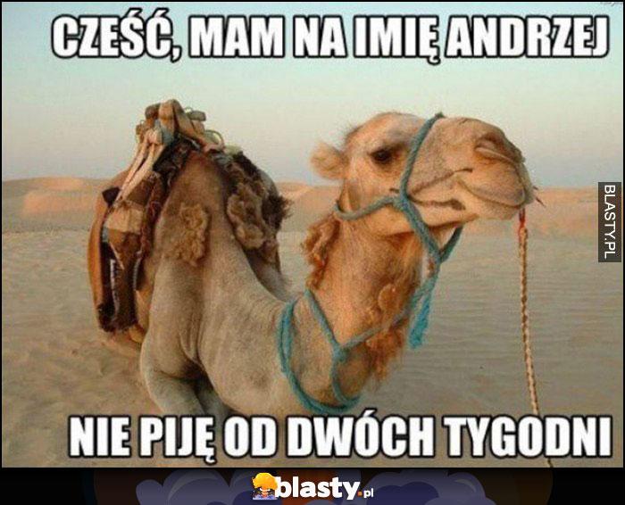 Wielbłąd cześć, mam na imię Andrzej, nie piję od dwóch tygodni