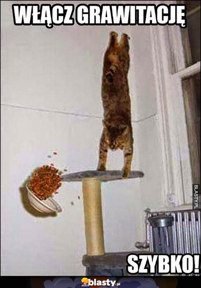 Włącz grawitację, szybko. Kot spada