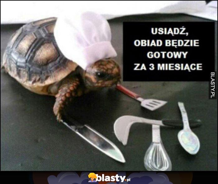 Żółw kucharz, usiądź obiad będzie gotowy za 3 miesiące