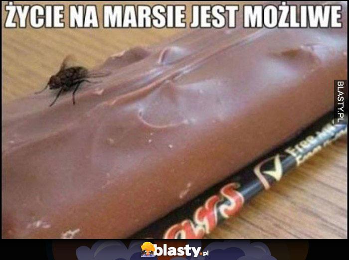 Życie na marsie jest możliwe mucha na batonie Mars