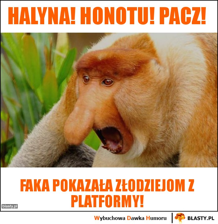 Halyna! Honotu! Pacz!