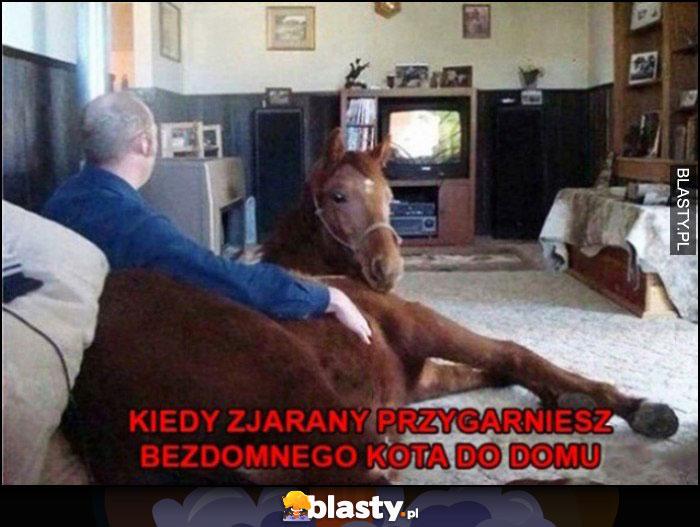 Kiedy zjarany przygarniesz bezdomnego kota do domu koń w salonie w mieszkaniu