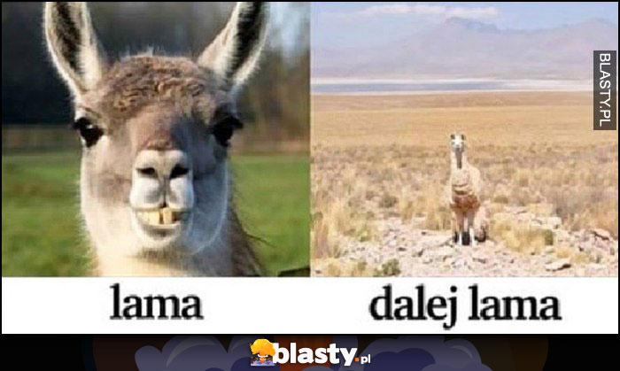 Lama lama w oddali dalej lama