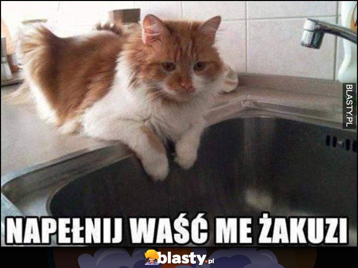 Napełnij waść me żakuzi kot nad zlewem