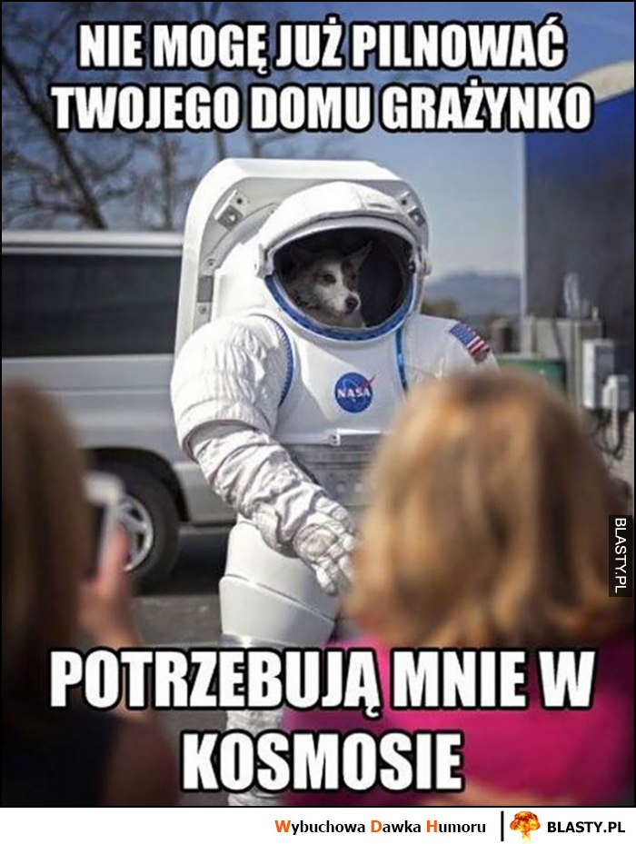 Nie mogę pilnować Twojego domu Grażynko, potrzebująmnie w kosmosie pies astronauta kosmonauta skafander kosmiczny