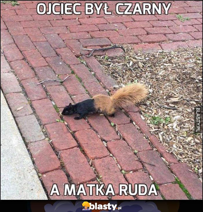 Ojciec był czarny a matka ruda dwukolorowa wiewiórka