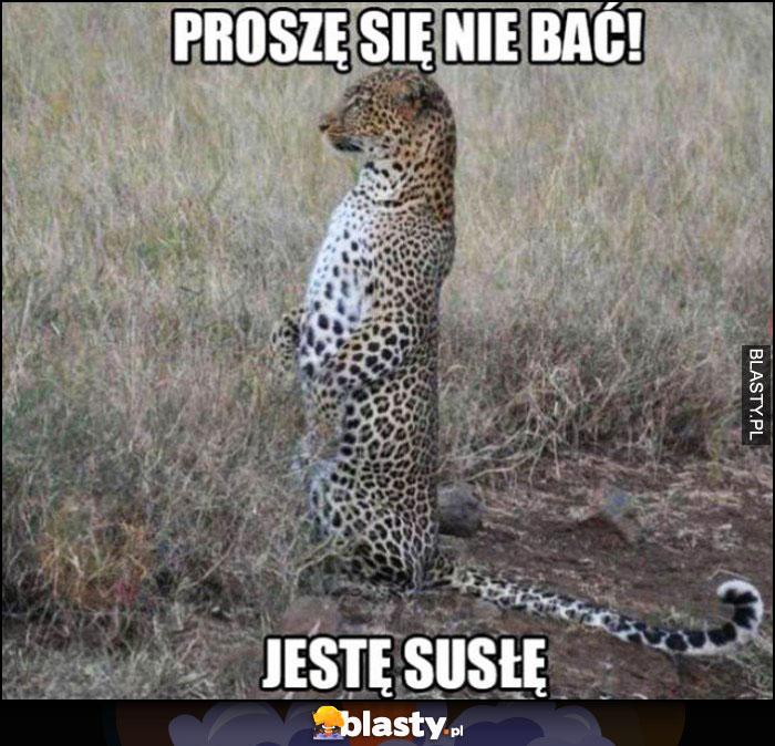 Proszę się nie bać jestem susłem gepard w pozie jak suseł