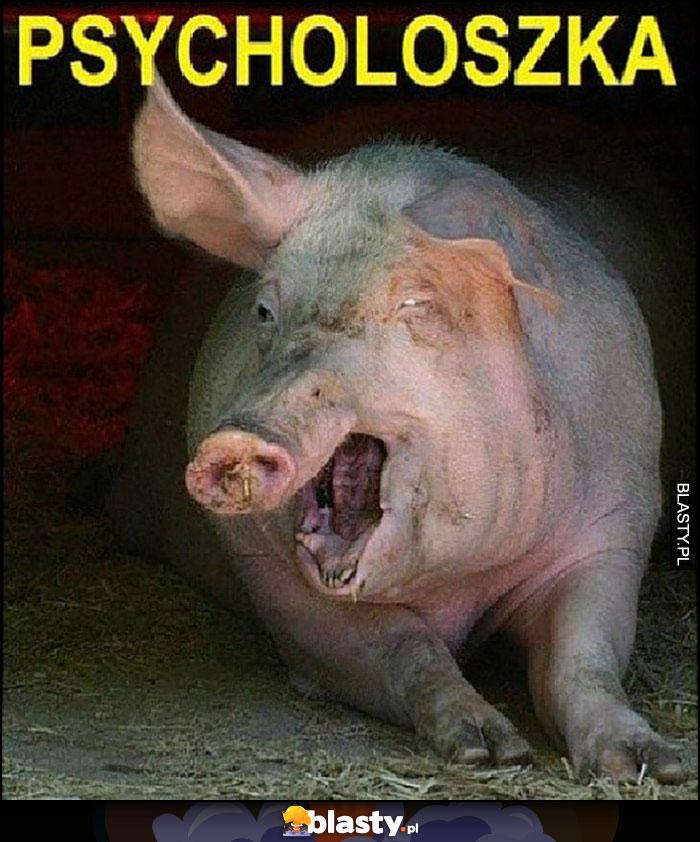 Psycholoszka locha świnia psycho
