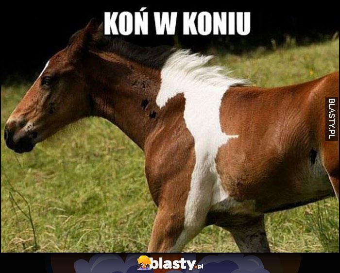 Koń w koniu umaszczenie wyglądające jak koń