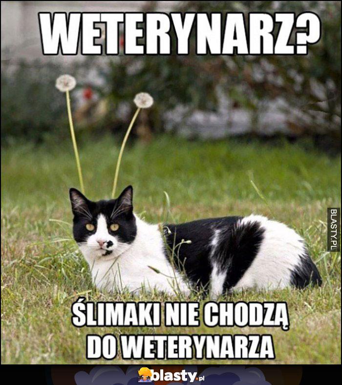 Kot: weterynarz? Ślimaki nie chodzą do weterynarza