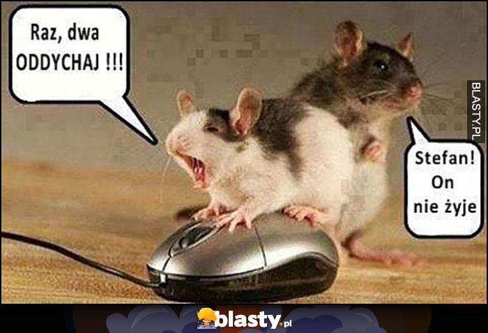 Raz dwa oddychaj myszy reanimują myszkę komputerową, Stefan on nie żyje