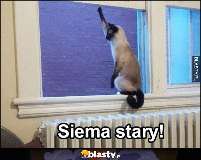 Siema stary kot wita się przez okno