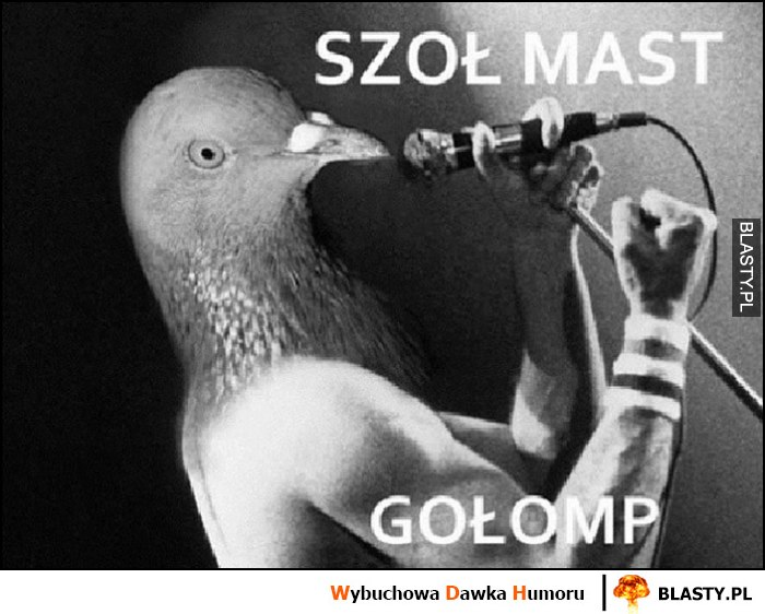 Szoł mast gołomp gołąb śpiewa show must go on Queen