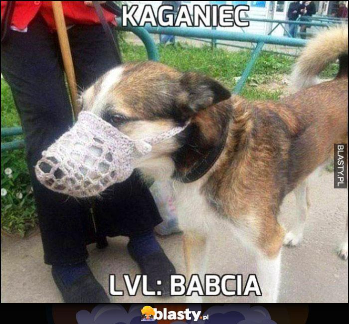 Kaganiec level babcia pies ma ma koronkowy kaganiec jak firanka