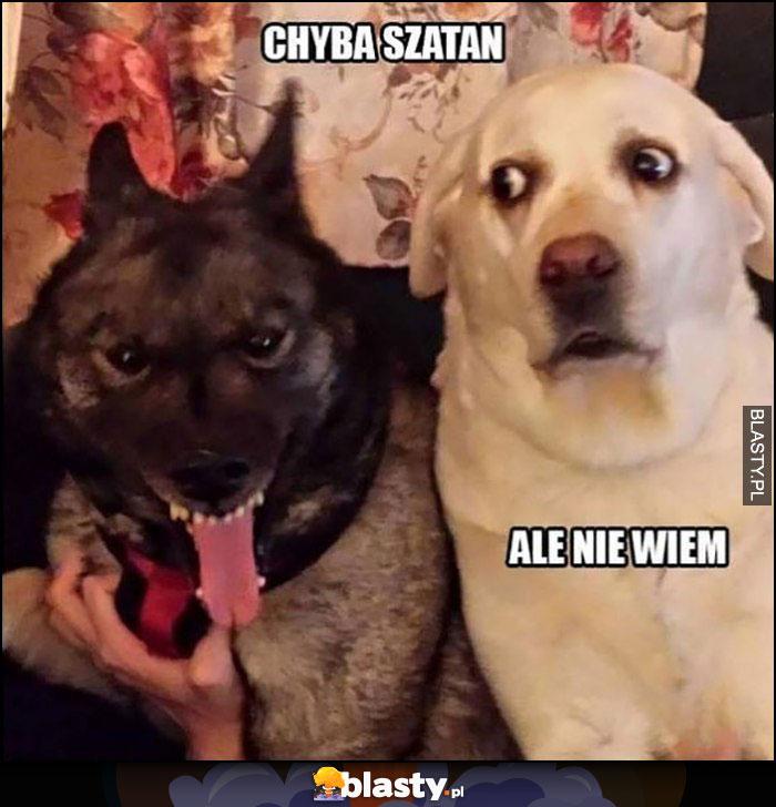 Psy chyba szatan ale nie wiem dziwna mina