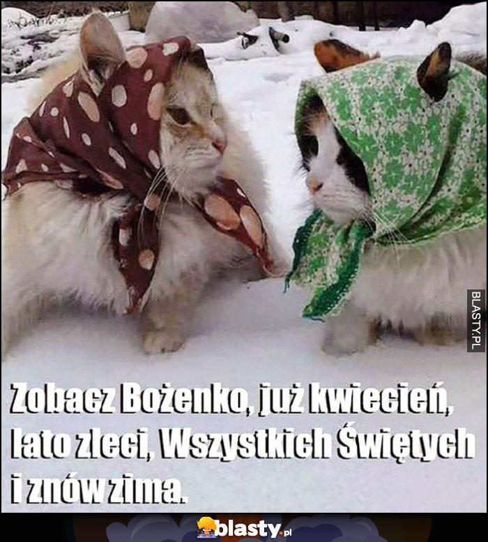 Zobacz Bożenko, już kwiecień, lato zleci, Wszystkich Świętych i znów zima koty w chustkach