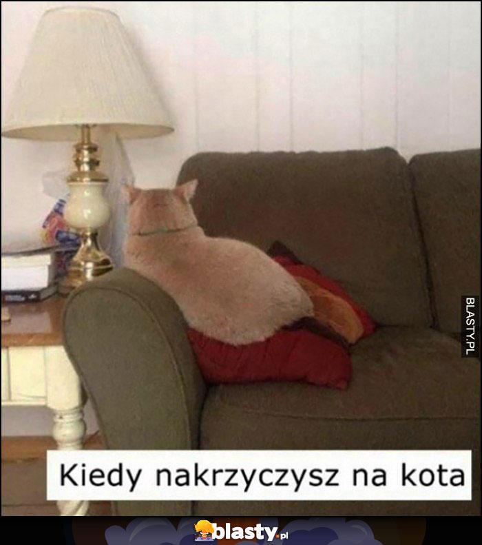 Kiedy nakrzyczysz na kota, kot obrażony odwrócił się