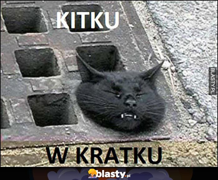 Kitku w kratku kot zaklinował się w kratce kanalizacyjnej