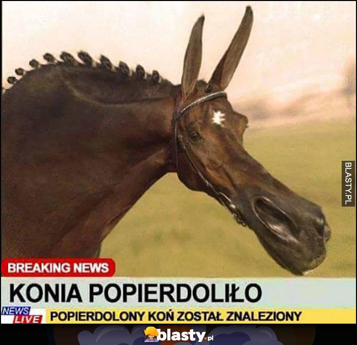 Konia popierdzieliło breaking news popierdzielony koń został znaleziony